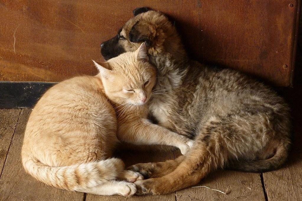 保護犬と保護猫