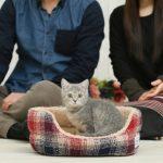 イヌTuber松本秀樹さんの犬猫のセリ市をみて。。